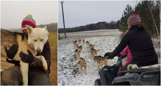 Workawaying with sled dogs