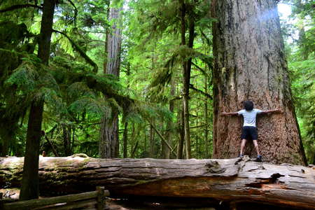 hug-a-tree-forest-offgrid-travel