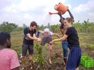 planting tree workaway group