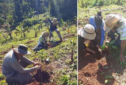 workaway puerto rico gardening outdoor slow travel project