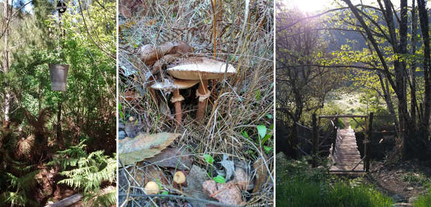 workaway-offgrid-forest-mushrooms-explore-nature