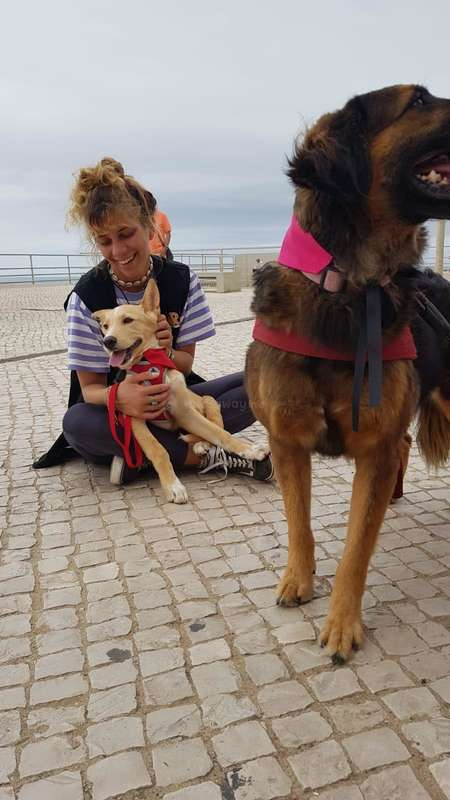 animal refuge workawayer dog walking