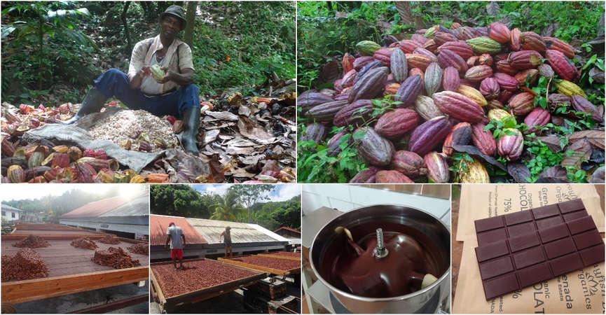 grenada caribbran chocolate workaway production collage