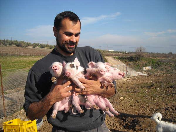 workaway solo travel volunteering farm cuddle piglets