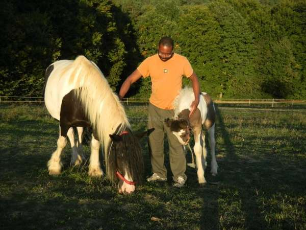 workawayer Kenneth petting two ponies surrounded by greenery