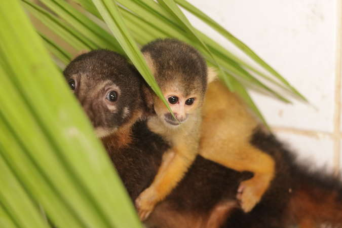 baby monkeys at wildlife rehabilitation centre