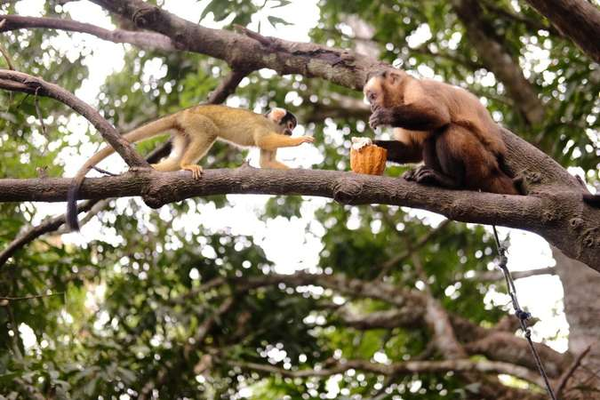 monkeys sharing snack on branch bolivia rescue