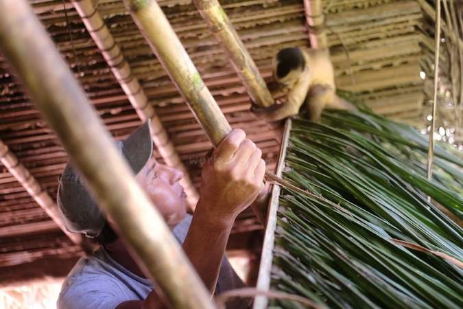 wildlife interaction baby monkey rescue