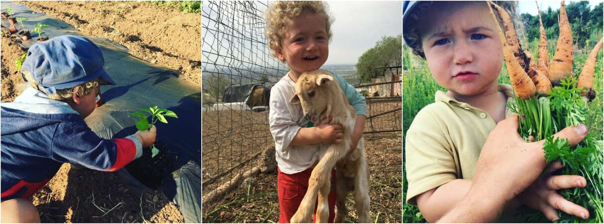 collage workawayer kid help with gardening hug goat pick carrots