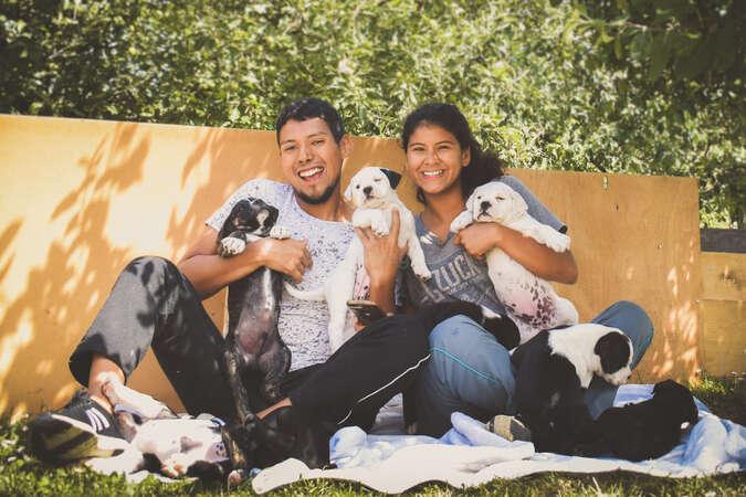 workawayers petsitting fluffy dog cuddles animal lovers