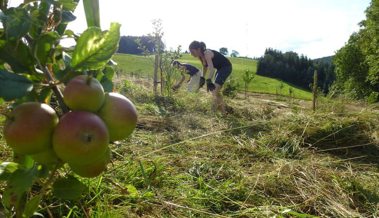 nature outdoor apple picking harvesting volunteer abroad nonprofit cider making eco project