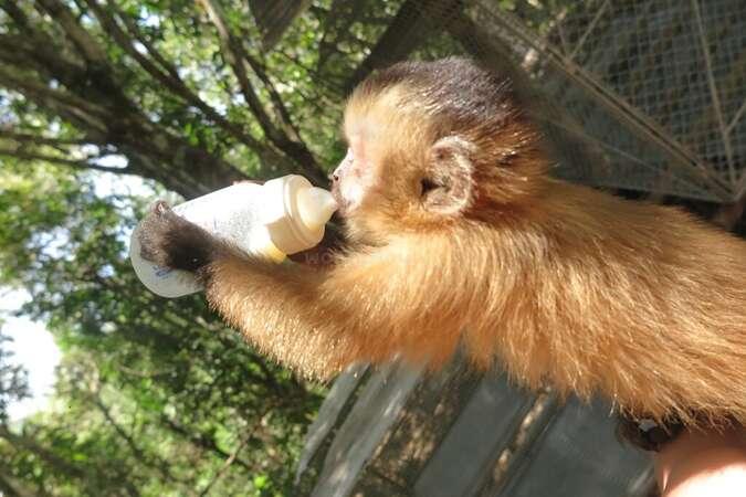 bolivian jungle wildlife rescue centre rehabilitation indigenous community feeding baby monkey