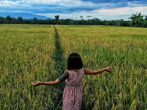 discover nature rice fields travel workaway deeper unique sustainable experience