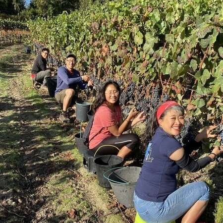 picking grapes for wine family adventure workaway group vineyard portugal farm