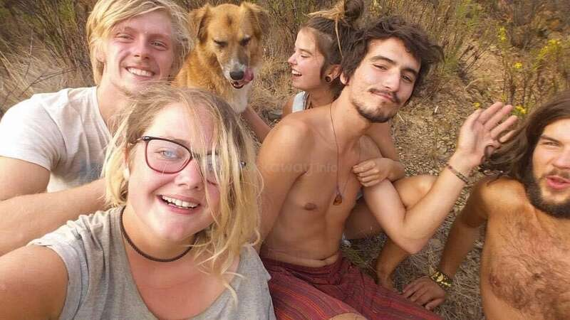 workaway tribe travel meet new friends animal care dog