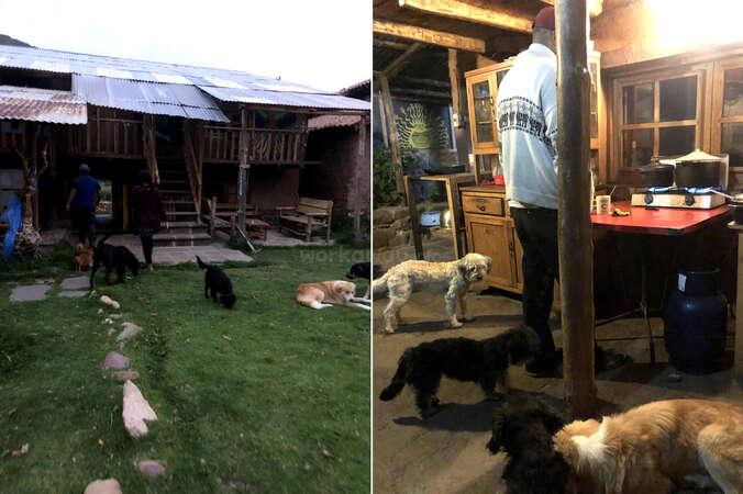 animal sanctuary Peru dogs roaming with workawayers